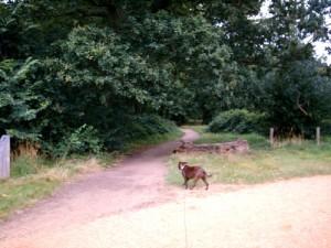 Dog Walking Wanstead Redbridge