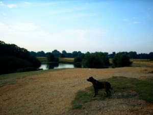 Doggies Adventures on Wanstead Flats